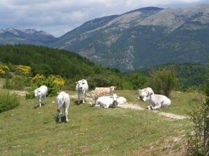 Turano (3)